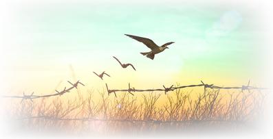 Vogel befreit